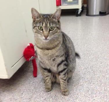 A very stoic kitty at Symphony Veterinary Center
