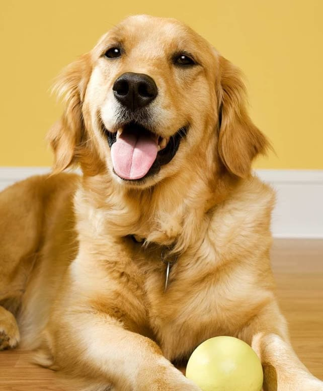 A doggie holds a ball in the floor at Niles Veterinary Clinic in Niles, Ohio