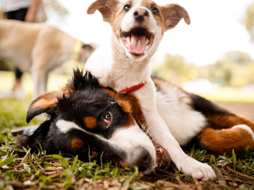 Happy dogs at The Archer in Sacramento, California
