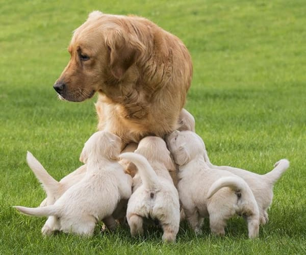 Mother dog with puppies at Niles Veterinary Clinic in Niles, Ohio