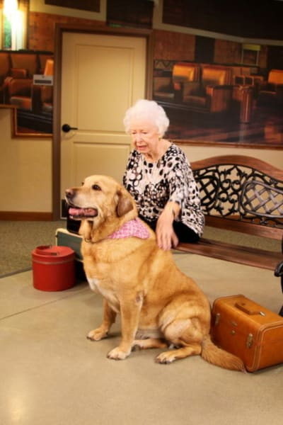 Resident sitting on a bench indoors petting a very large dog at Quail Park Memory Care Residences of Visalia in Visalia, California
