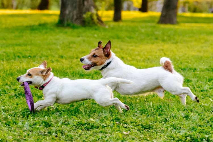 Dogs playing in the park at Rooster Apartments in Seattle, Washington