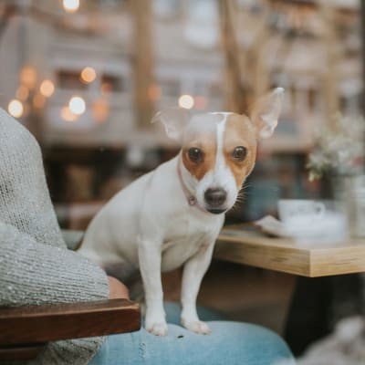 Link to our pet policy at Fountains at Mooresville Town Square in Mooresville, North Carolina