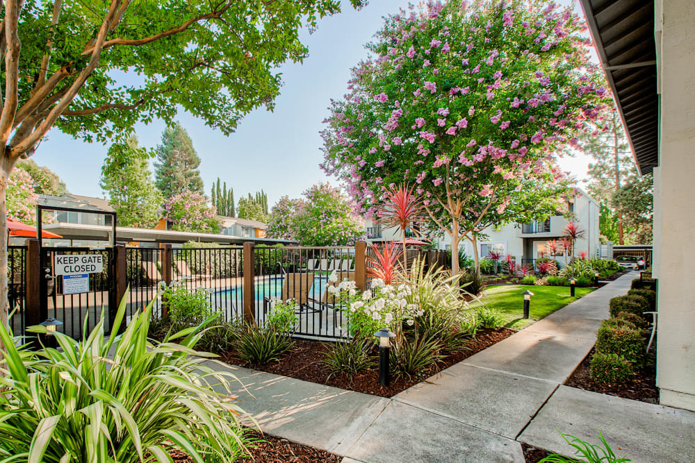 Walking paths flanked by professionally maintained landscaping near the swimming pool area at Pleasanton Place Apartment Homes in Pleasanton, California