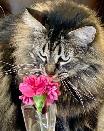 Cat with a Flower at Sun Oak Senior Living