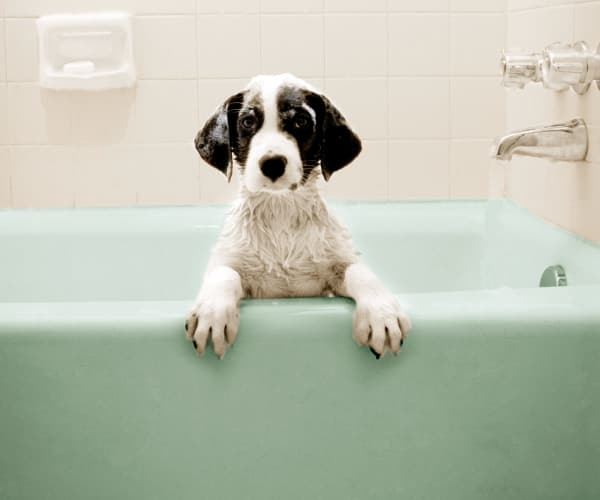 A puppy in a teal bathtub at Villas at Medical Center