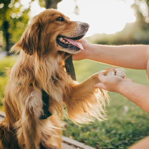 View our pet policy at Oley Meadows in Oley, Pennsylvania