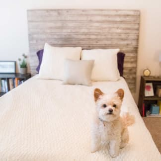 A small dog on a bed at Ironwood in Altoona, Iowa