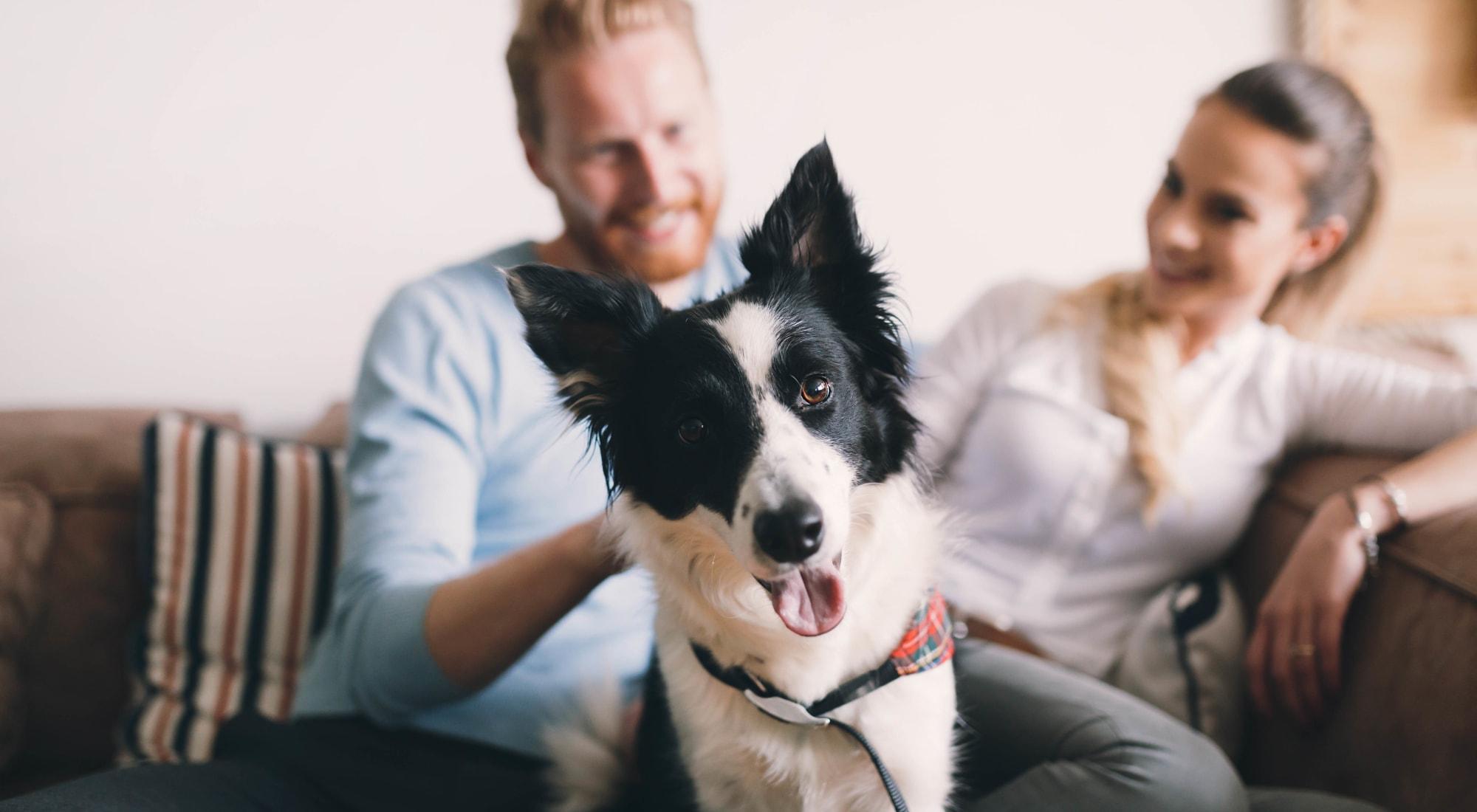 Pet-friendly apartments at Blackhawk Apartments in Elgin, Illinois