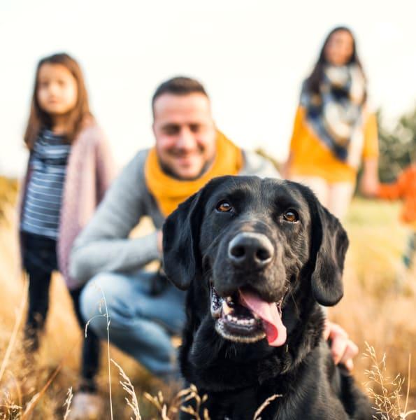 Happy dogs at Preston View in Morrisville, North Carolina