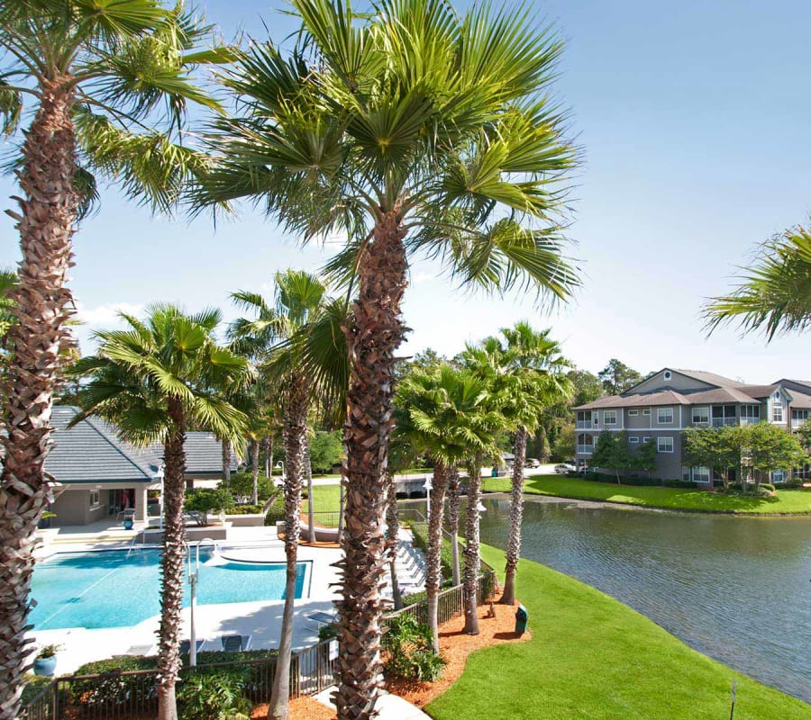 Palm trees by the pool at Ocean Park of Ponte Vedra in Jacksonville Beach, Florida