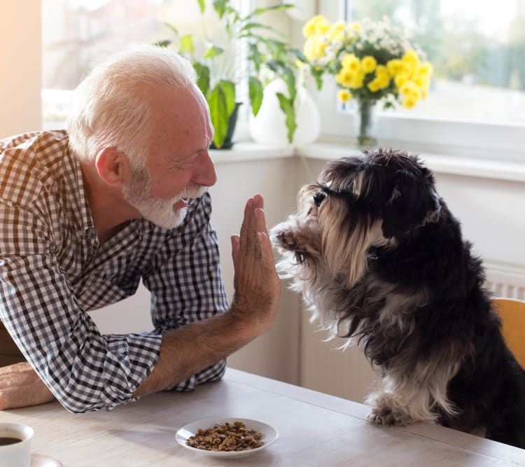 Dog high-fiving his owner at Luxe Scottsdale Apartments in Scottsdale, Arizona