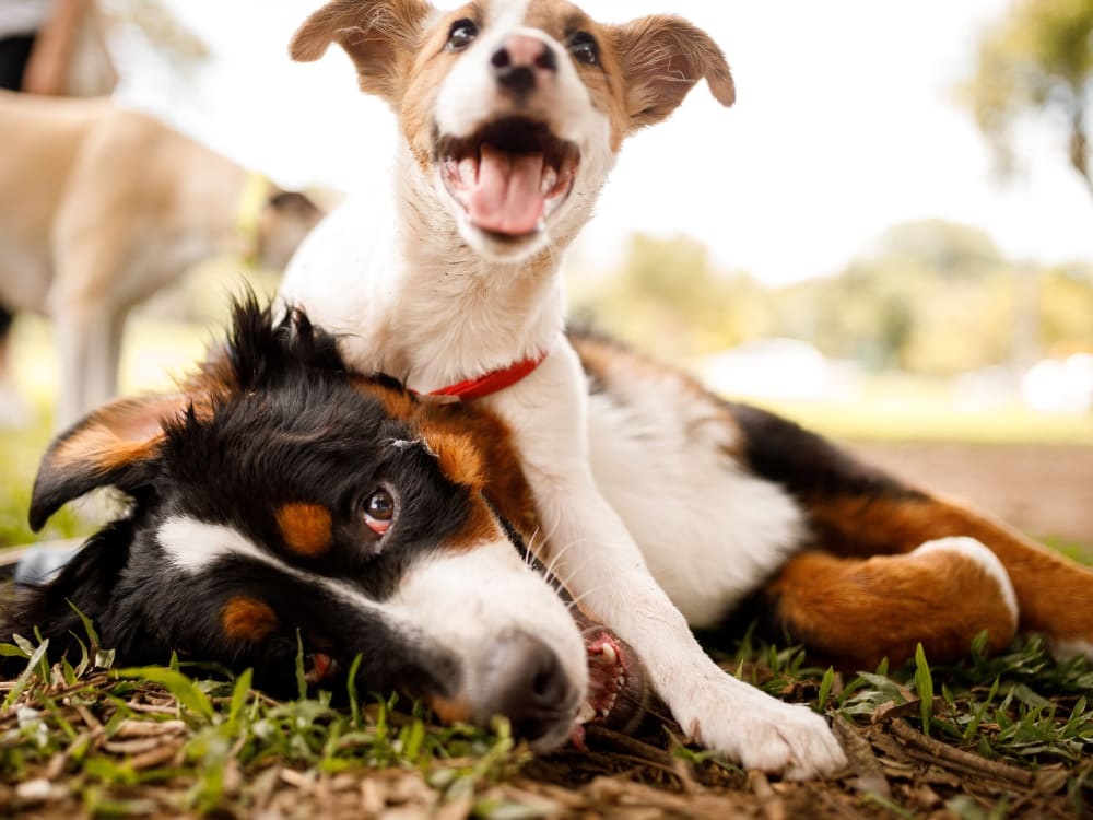 Happy dogs at Cumberland Crossing in Marietta, Georgia