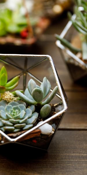 Succulents thriving on a table in a model home at Esplanade Apartment Homes in Riverside, California