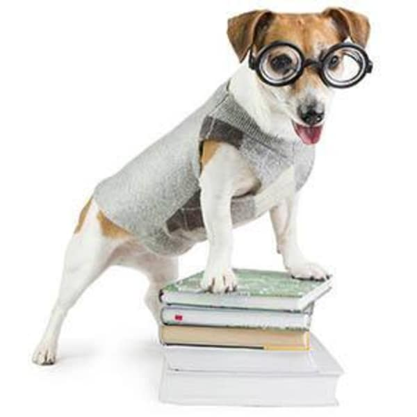 Glasses wearing dog standing on top of books