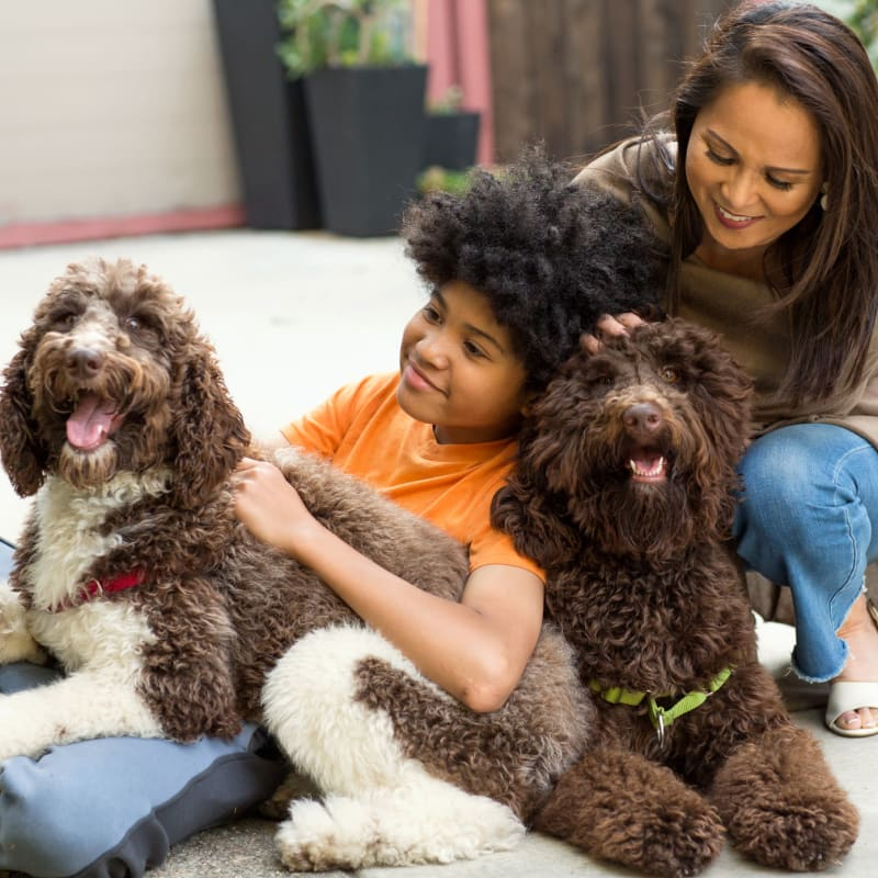 Family with their dogs at Windmill Terrace in Bedford, Texas