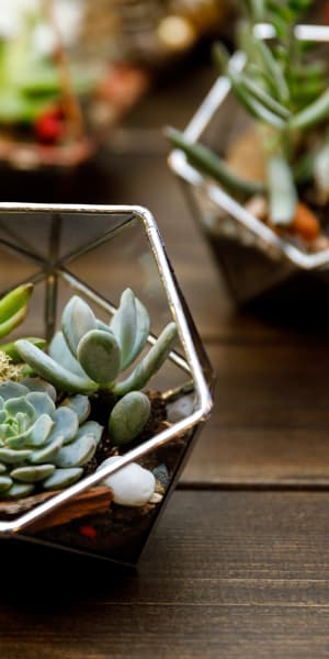 Succulents thriving on a table in a model home at Mill Springs Park Apartment Homes in Livermore, California