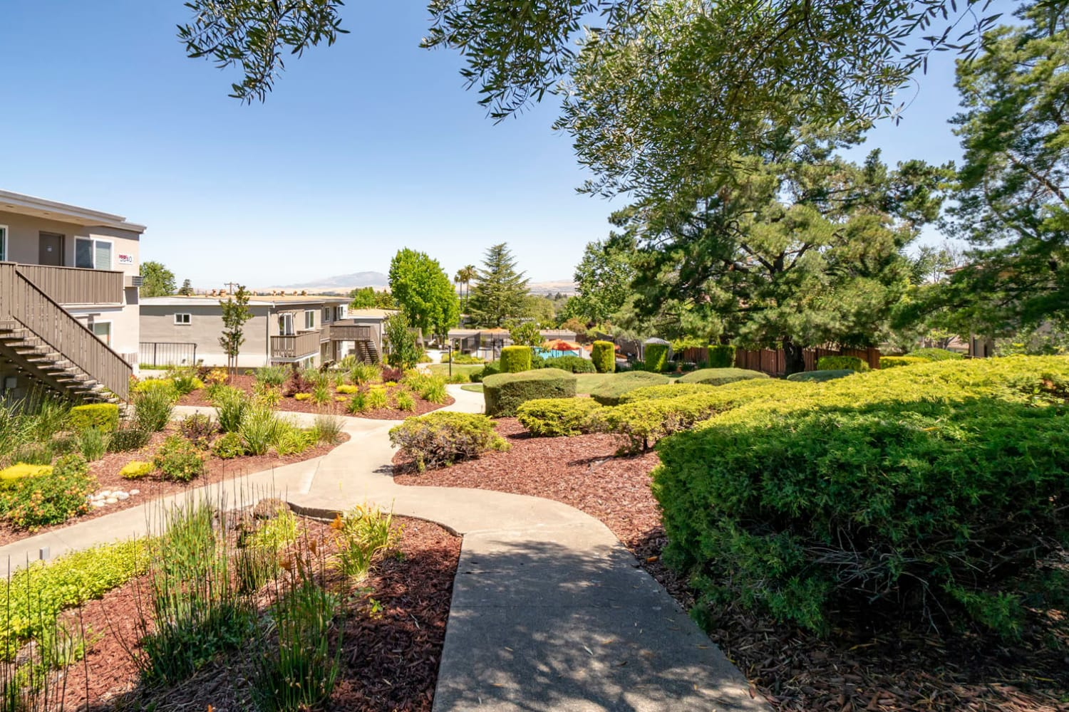 Walking paths flanked by professionally maintained landscaping and mature trees at Pleasanton Heights in Pleasanton, California