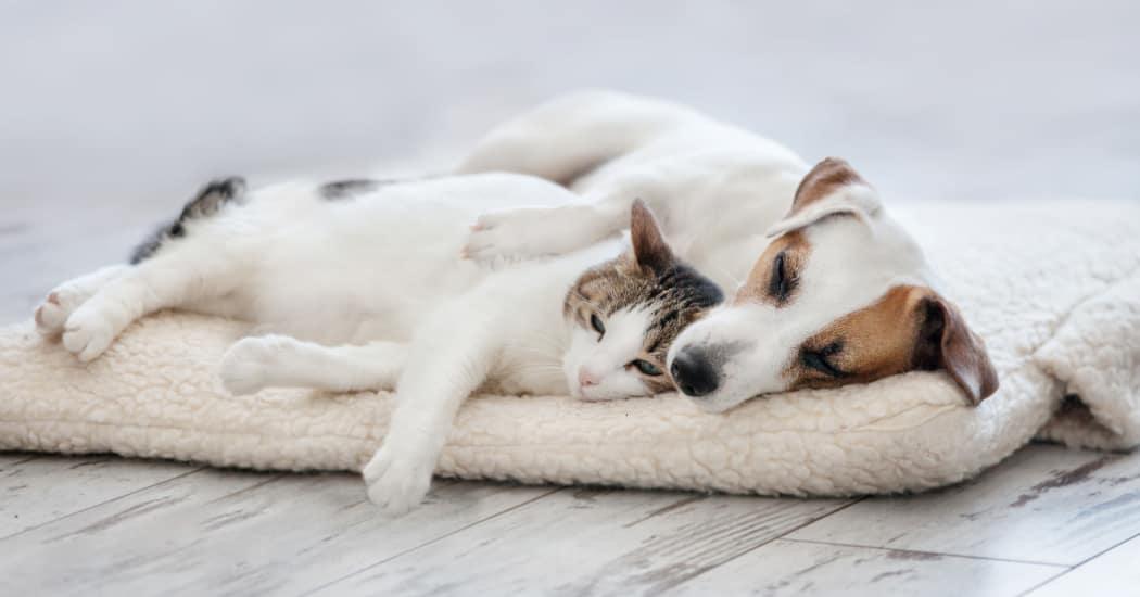 Dog and Cat sleeping at Red Knot at Edinburgh in Chesapeake, VA