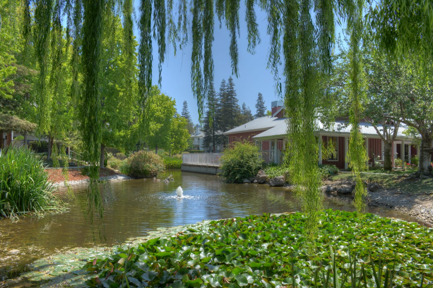 Pond at Cotton Wood Apartments in Dublin, California
