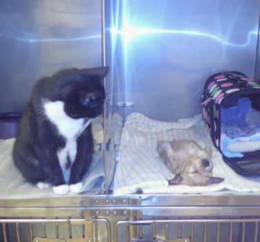 A tuxedo cat judging a sleeping puppy at Symphony Veterinary Center
