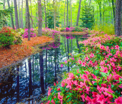 Beautiful creek and flowers near Berkshire Fort Mill in Fort Mill, South Carolina