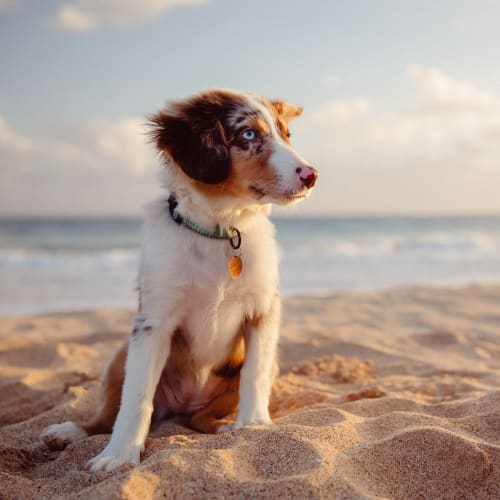 Dog hanging out on the beach near Town Lantana in Lantana, Florida