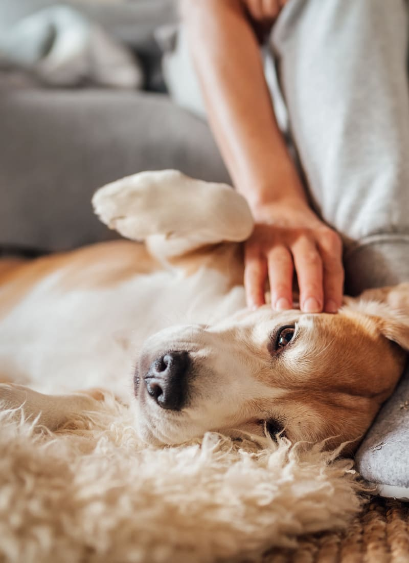 View our pet policy at Marquis SoCo in Austin, Texas