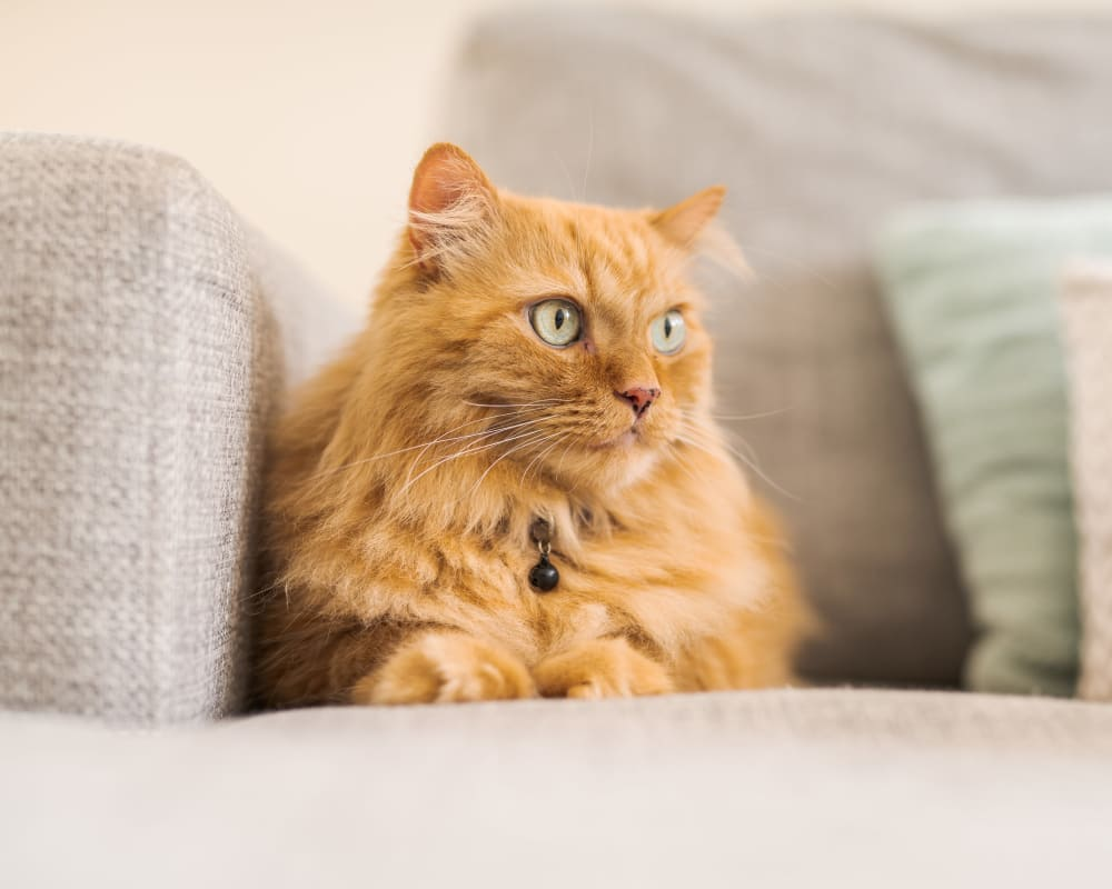 Cat on couch at State Gardens in Hackensack, New Jersey