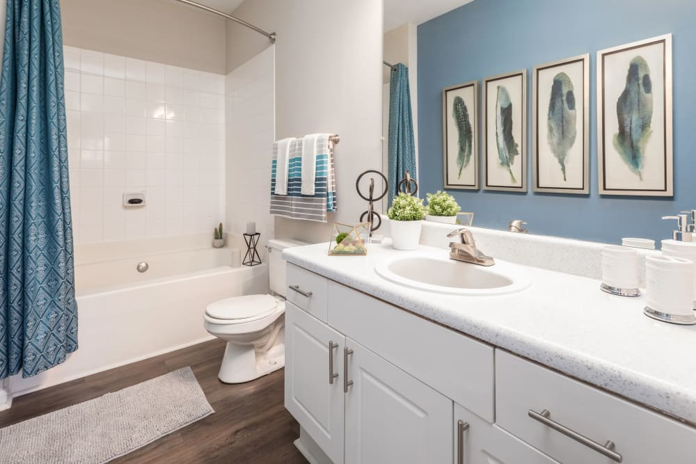 Lovely bathroom with blue accent wall and shower curtains at Highlands at Alexander Pointe in Charlotte, North Carolina
