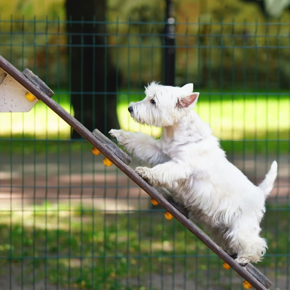 Dog enjoying a dog park in Minneapolis, Minnesota near Oaks Minnehaha Longfellow