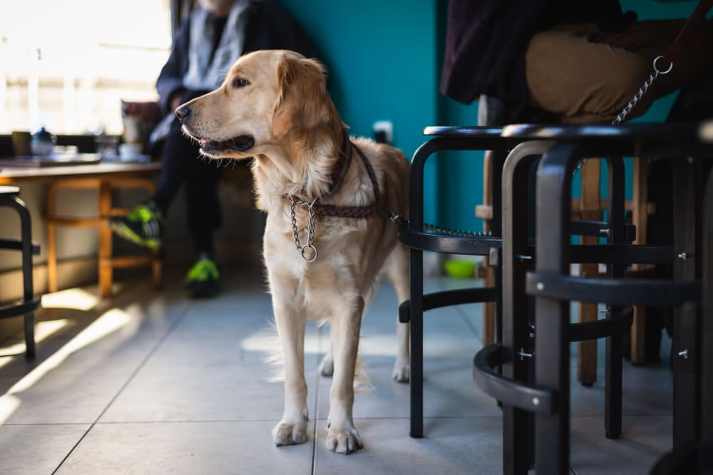 Resident and his dog at a pet-friendly restaurant near The Sutton Collection in New York, New York