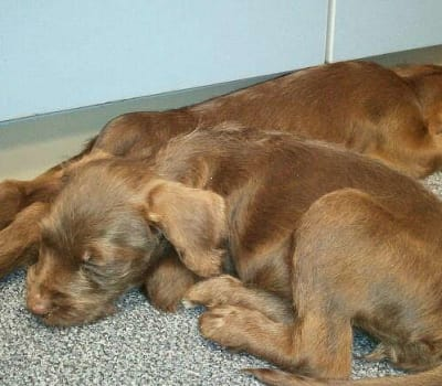 Abandoned puppies taking a nap at Starch Pet Hospital in Des Moines, Iowa