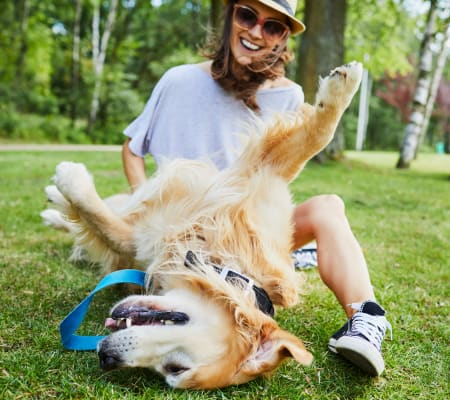 Resident playing with her big fluffy dog near Deer Valley Apartment Homes in Roseville, California