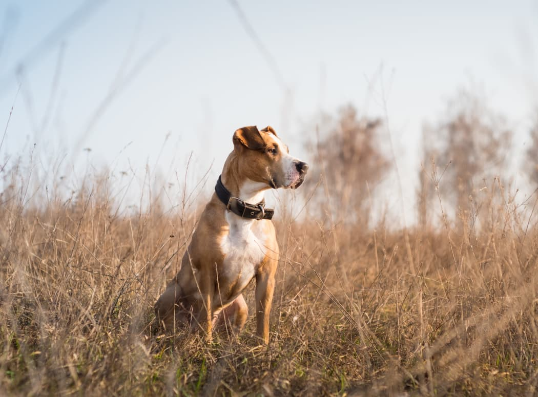 Dog in a field in Tulsa, Oklahoma near The Courtyards
