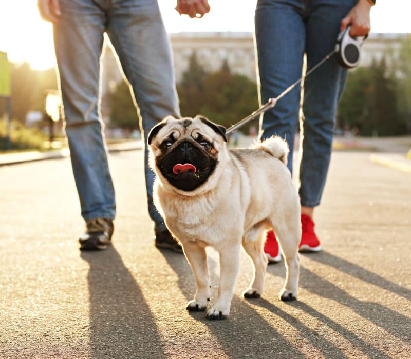 Residents walking their dog outside of Austin Midtown in Austin, Texas