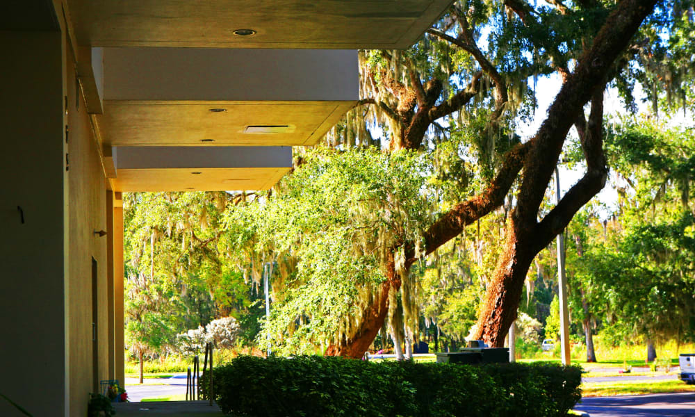 The beautiful grounds at The Grande in Brooksville, Florida