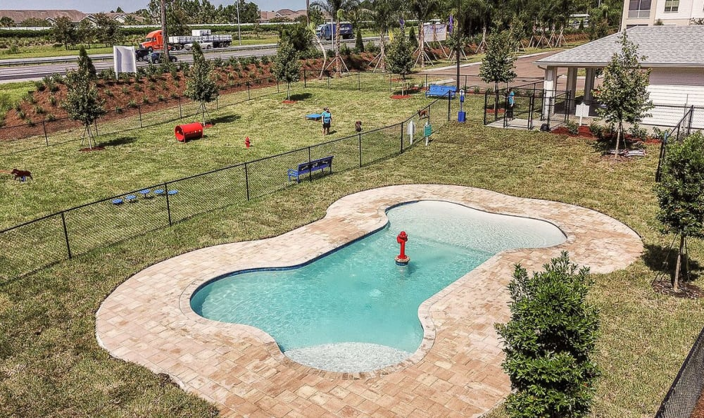Dog bone shaped pool for dog spa at Palm Bay Club