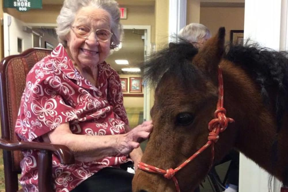 A happy resident petting a horse at The Willows at Bellevue in Bellevue, Ohio