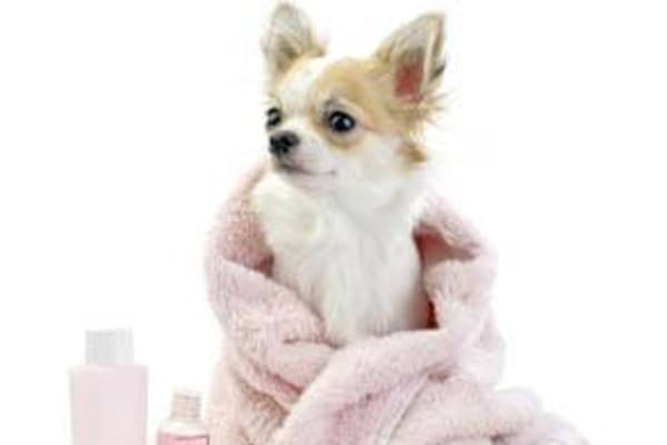 College Mall Veterinary Hospital will make your pet look fabulous.