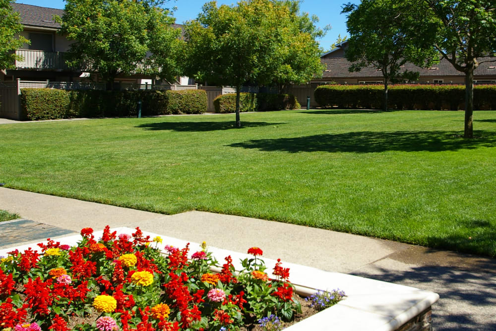 Lush lawn at Village Green Apartments in Cupertino, California