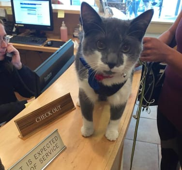 Symphony Veterinary Center has the cutest patients. Meowingtons is happy to be a patient there!