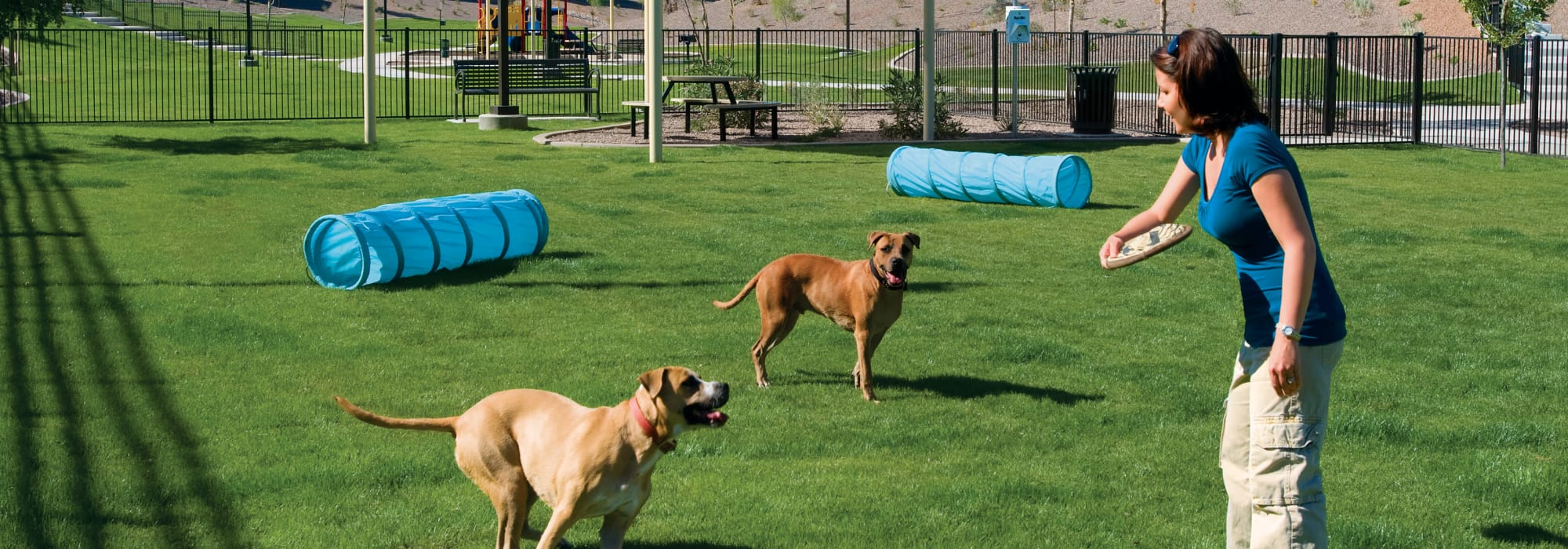 Resident dog park at Ravenwood Heights in Tempe, Arizona