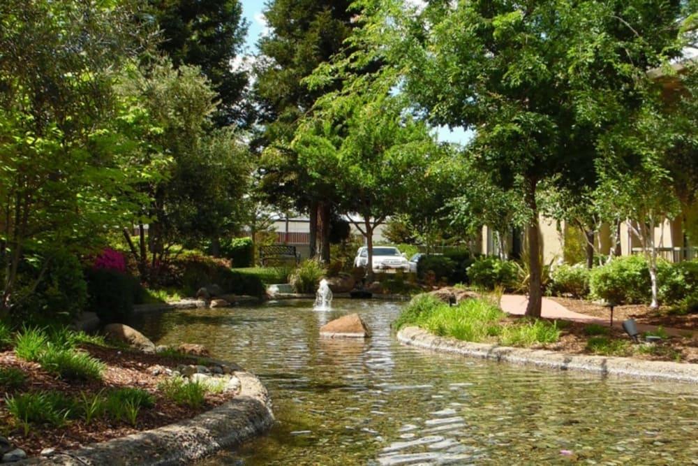 Lovely pond at Winding Commons Senior Living in Carmichael, California