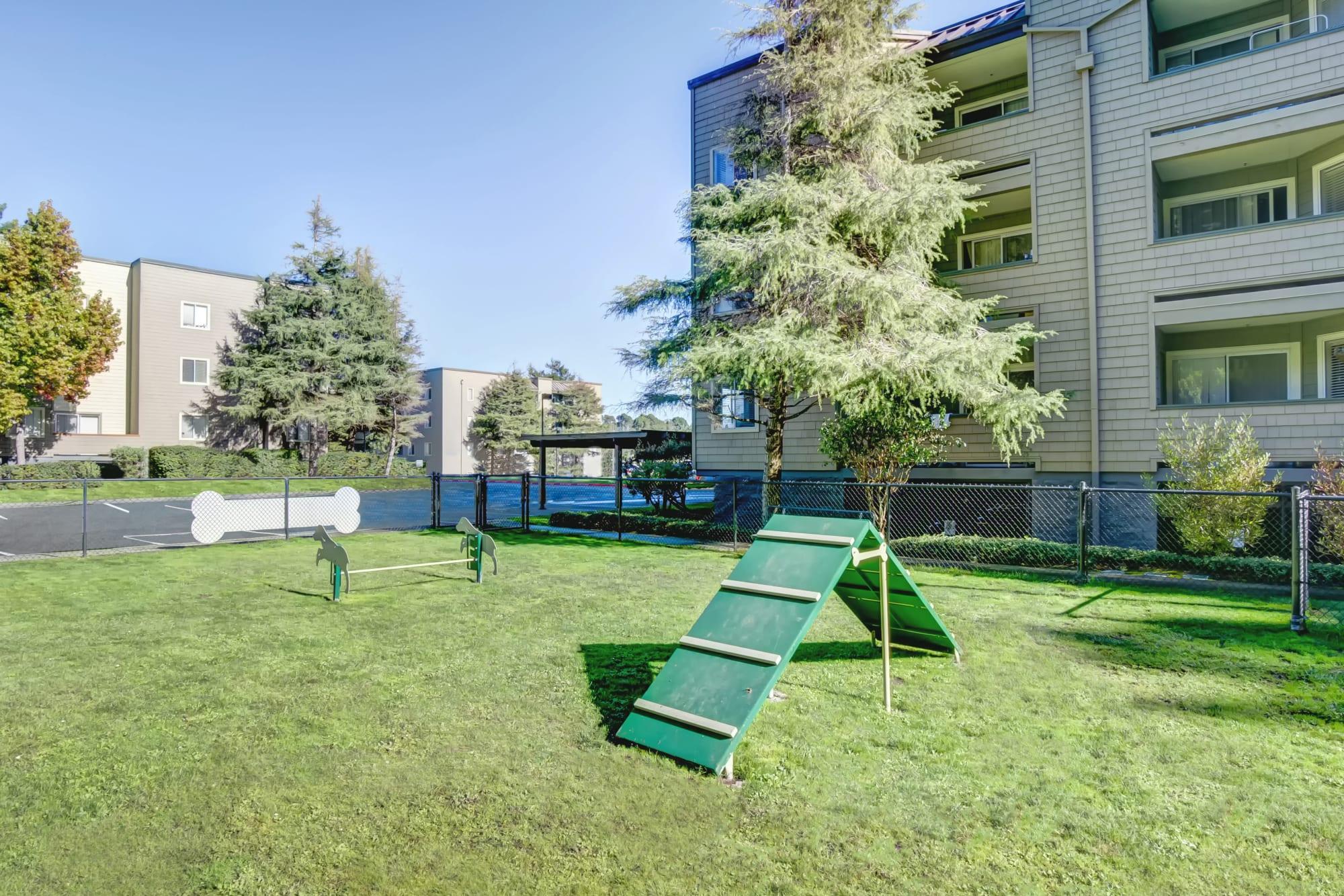 The dog park, one of Serramonte Ridge Apartment Homes's numerous community amenities.