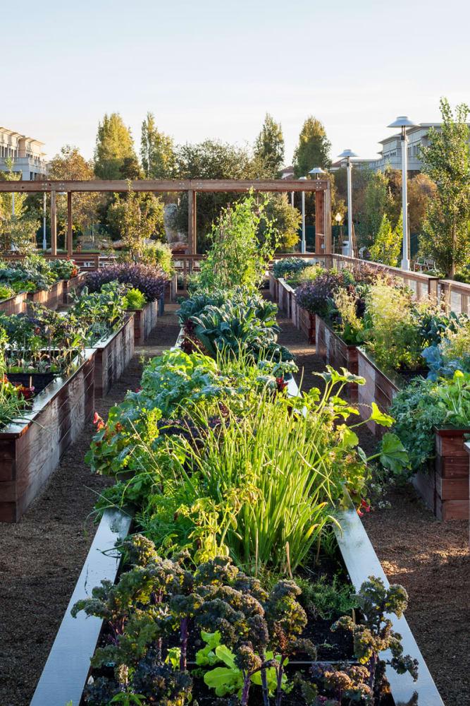 Lush community garden at Solana Stapleton Apartments in Denver, Colorado