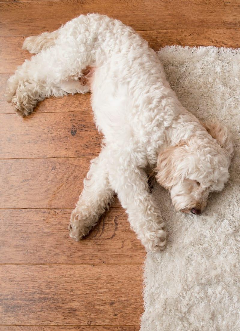 Two pets maximum per apartment at Whisper Creek Apartment Homes in Lakewood, Colorado