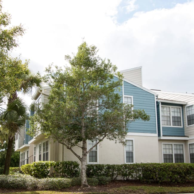 An apartment with a tree in front of it at Fairways at Feather Sound in Clearwater, FL