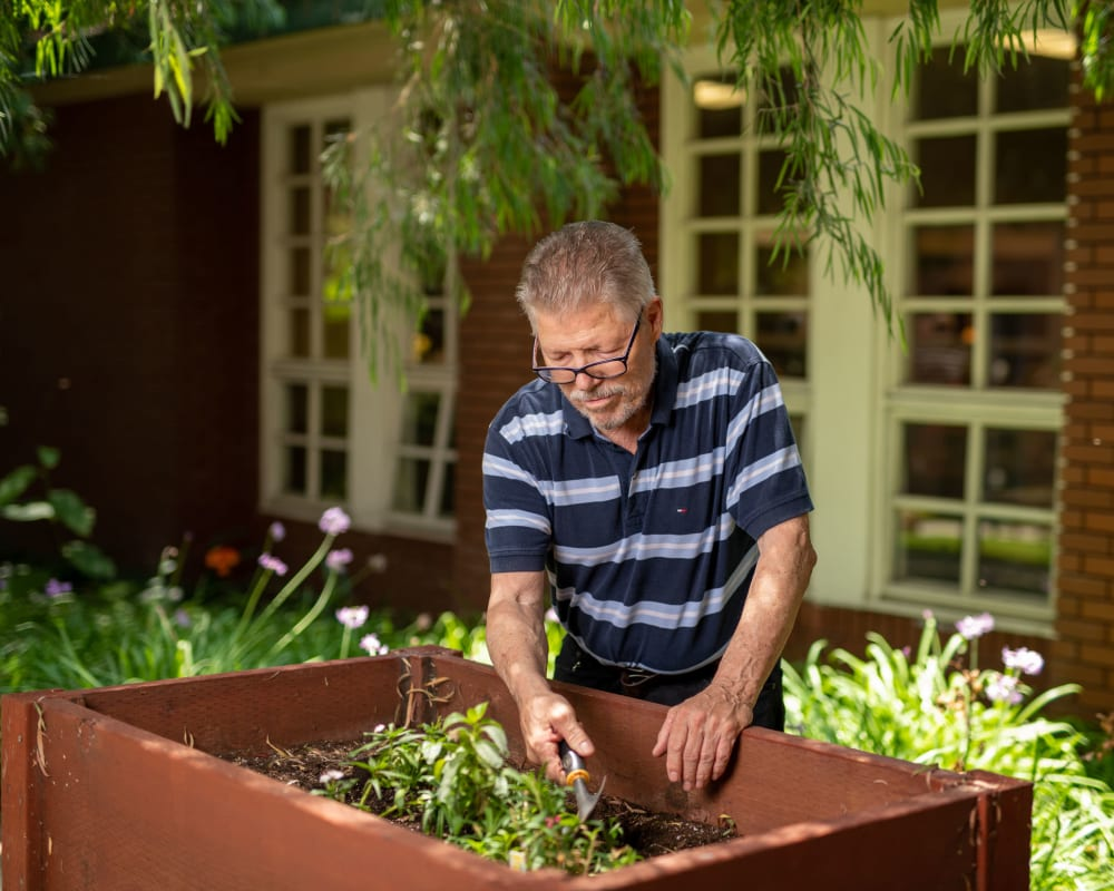 Resident tending his patch in the community garden at WellQuest of Elk Grove in Elk Grove, California