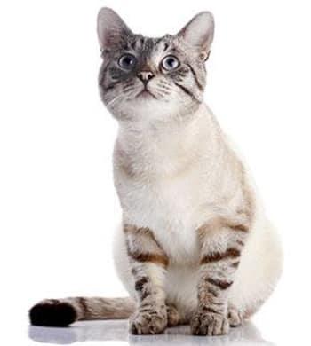 Kitten looking at something shiny at Civic Feline Clinic in Walnut Creek, CA